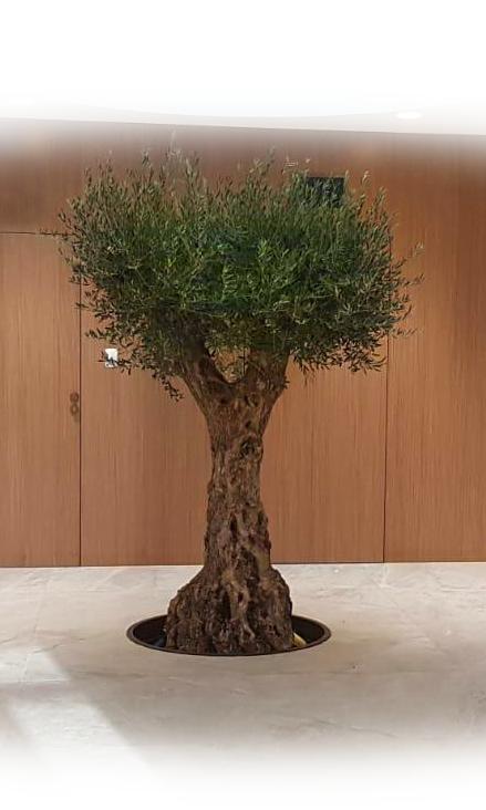 OVIklinika - Nasze Drzewo Oliwne